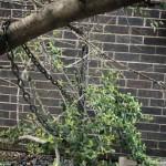 oak-grove-hs-00152